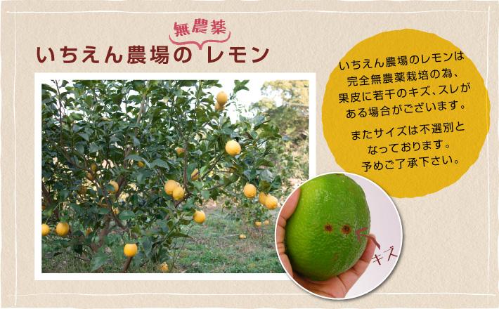 いちえん農場の無農薬レモン