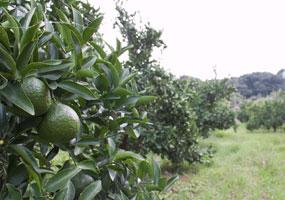 無農薬栽培とは健康な畑を保つこと