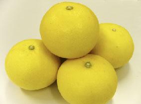 「爽やか」な柑橘