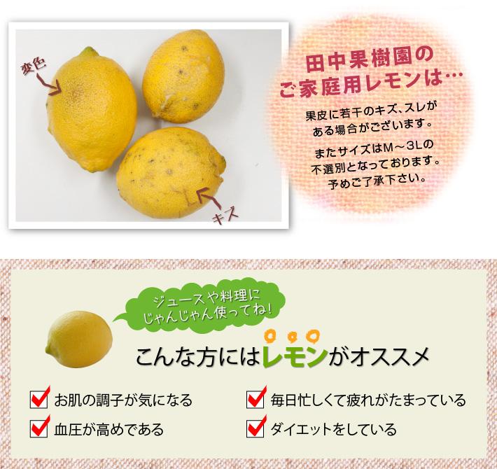 ご家庭用レモンは果皮にキズ・スレがある場合がございます。サイズは不選別です。