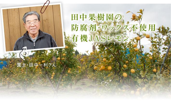 田中さんの防腐剤・ワックス不使用有機JASレモン