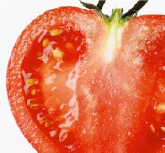 シュガートマト ロッソプレミアム10