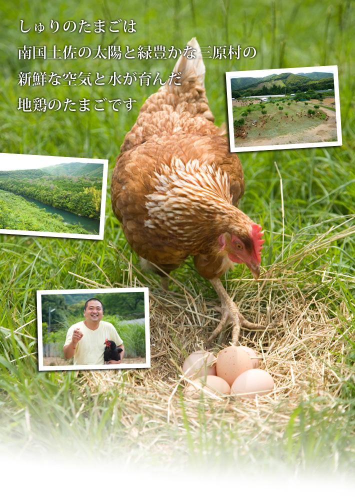 しゅりの卵は南国土佐の太陽と緑豊かな三原村の新鮮な空気と水が育んだ地鶏の卵です