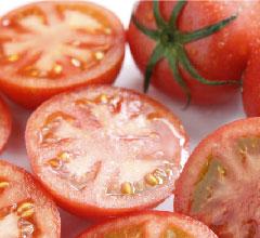 シュガートマト ビアンコ08
