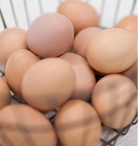 小さくても味わい豊かな卵